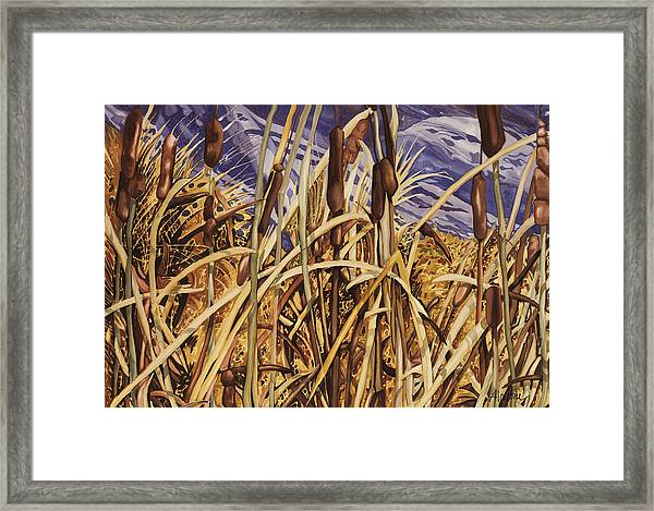 Contemplating Cattails Framed Print