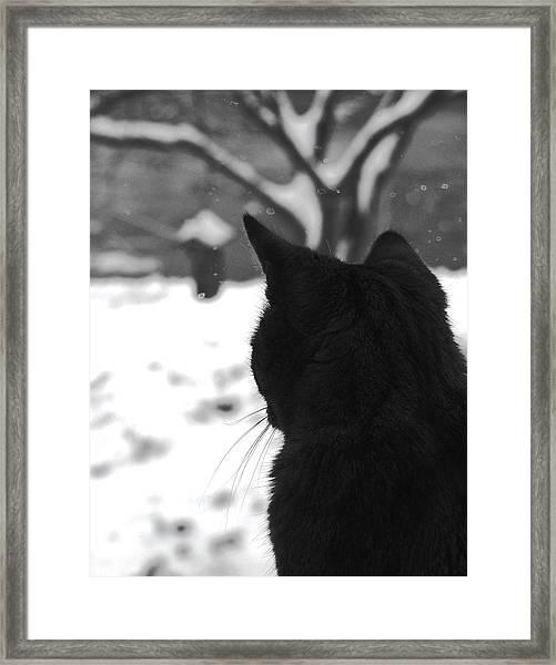Contemplating Winter Framed Print