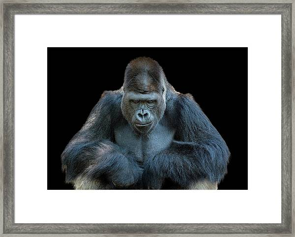 Contemplative Gorilla Framed Print