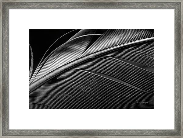 Contour Feather Framed Print