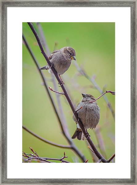 Conversation Of The Day Framed Print