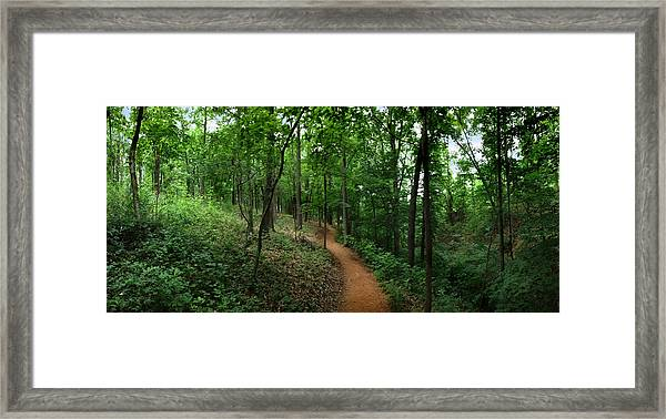 Cool And Green And Shady Framed Print