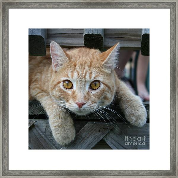 Cool Cat Named Calvin Framed Print