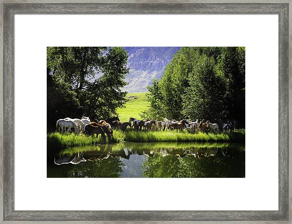 Cool Waters Framed Print