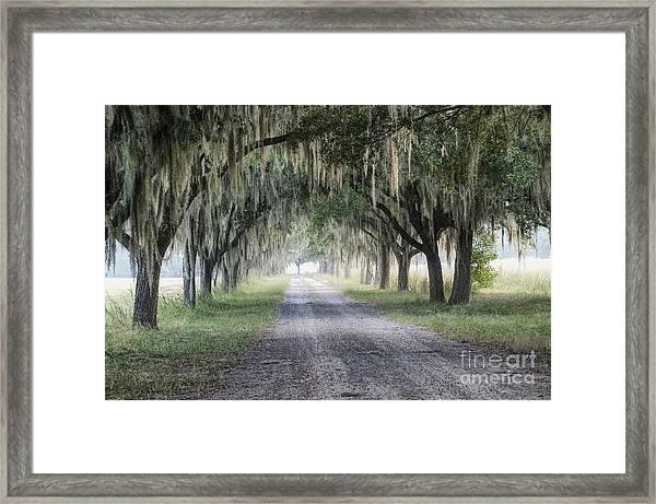Coosaw Fog Avenue Of Oaks Framed Print
