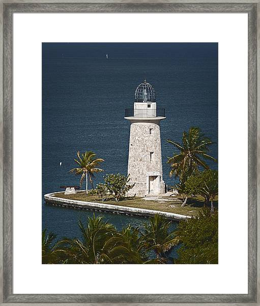 Coral Light C Framed Print