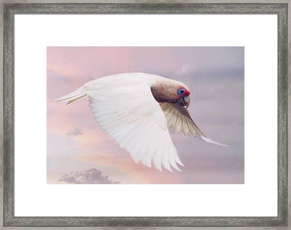 Corella In Flight Framed Print