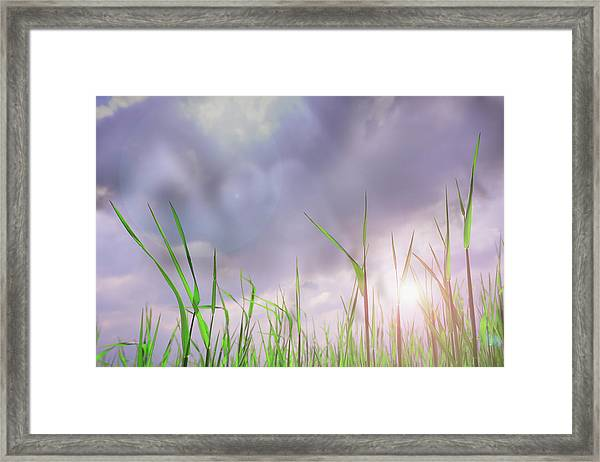 Corn Plant With Thunderstorm Clouds Framed Print by Silvia Otte