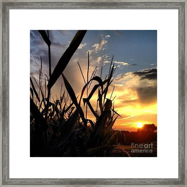 Cornfield Sundown Framed Print