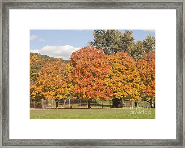 Corning Fall Foliage 1 Framed Print