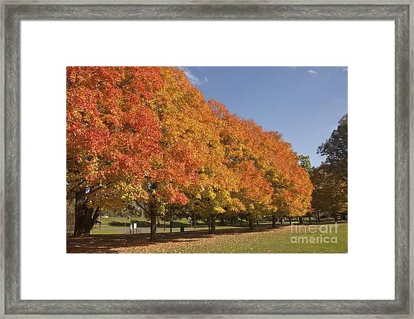 Corning Fall Foliage 2 Framed Print