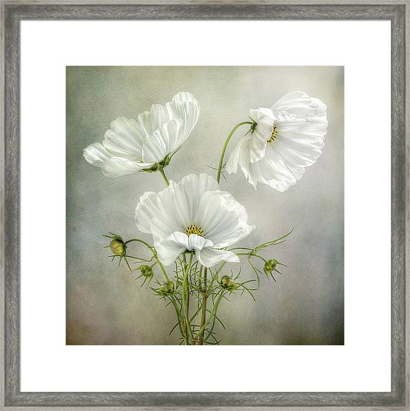 Cosmos Charm Framed Print by Mandy Disher