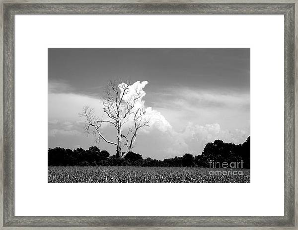 Cotton Candy Tree - Clarksdale Mississippi Framed Print