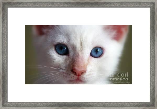 Framed Print featuring the photograph Cotton by Sandra Bauser Digital Art