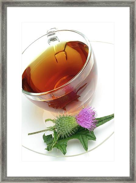 Cotton Thistle Herbal Tea Framed Print by Bildagentur-online/th Foto/science Photo Library