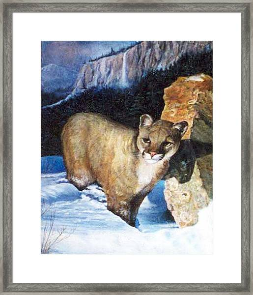 Cougar In Snow Framed Print