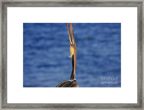 Ocean Dream Framed Print