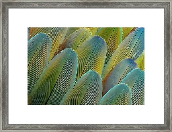 Covert Wing Feathers Of The Camelot Framed Print