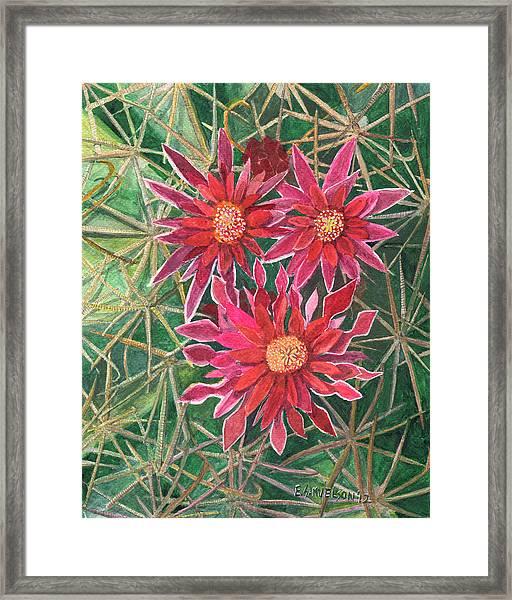 Coville Barrel Blossoms Framed Print