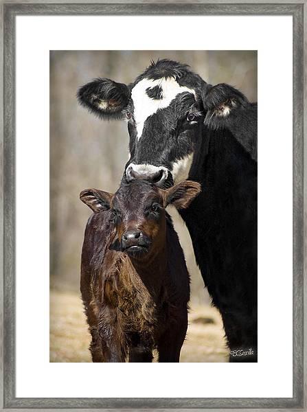 Cow And Calf Framed Print by Elizabeth Vieira