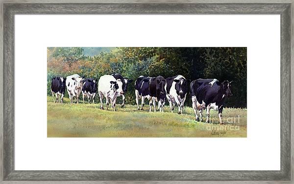 Cow Trail Framed Print