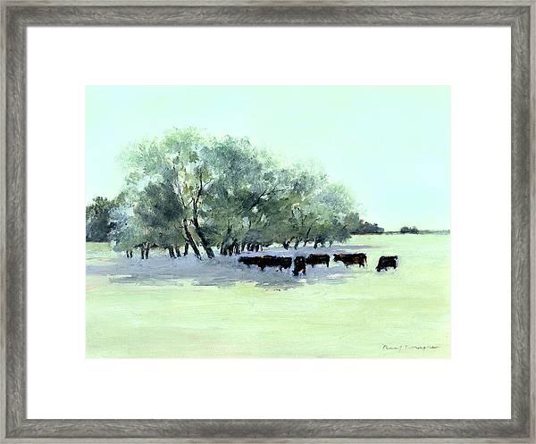Cows 7 Framed Print