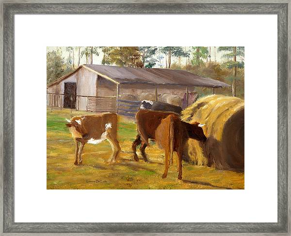 Cows Hay And Barn In Louisiana Framed Print