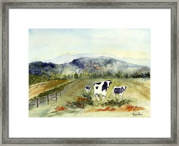 Cows In Vermont  Framed Print by Peggy Maunsell