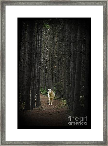 Coyote Howling In Woods Framed Print