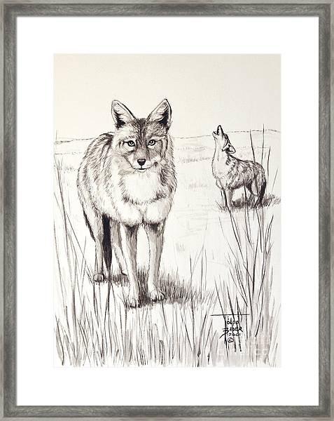 Coyote Life Framed Print
