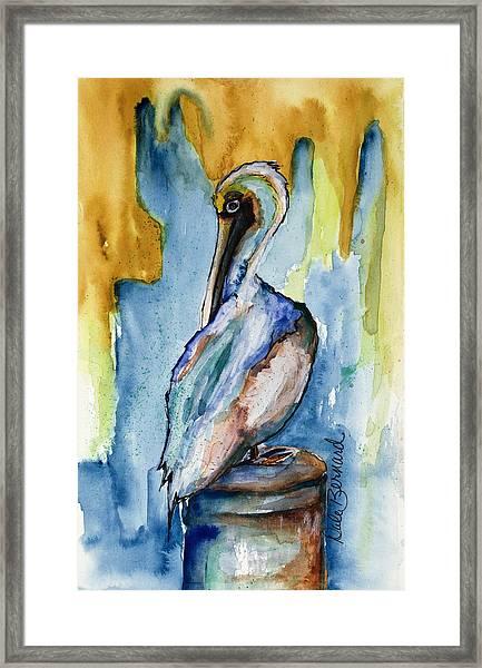 Cozumel Pelican  Framed Print