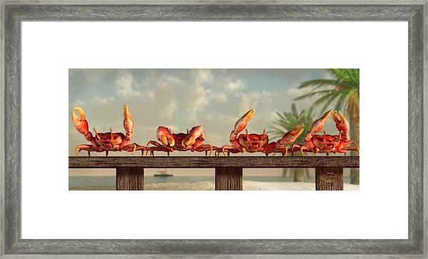 Crab Dance Framed Print