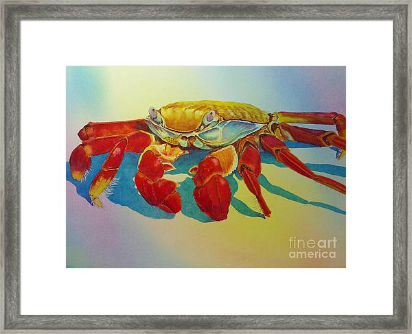 Colorful Crab  Framed Print