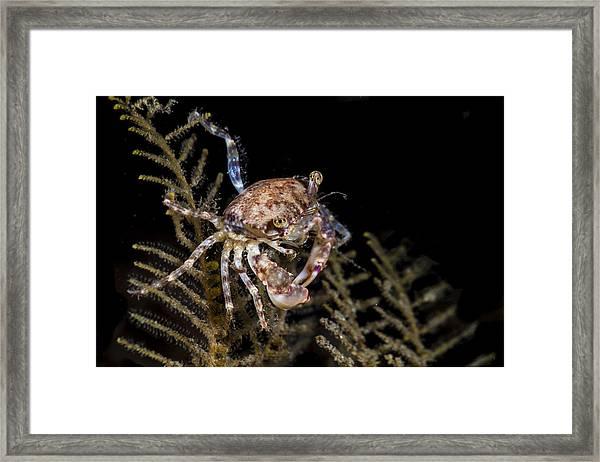 Crab Sitting At Night Framed Print