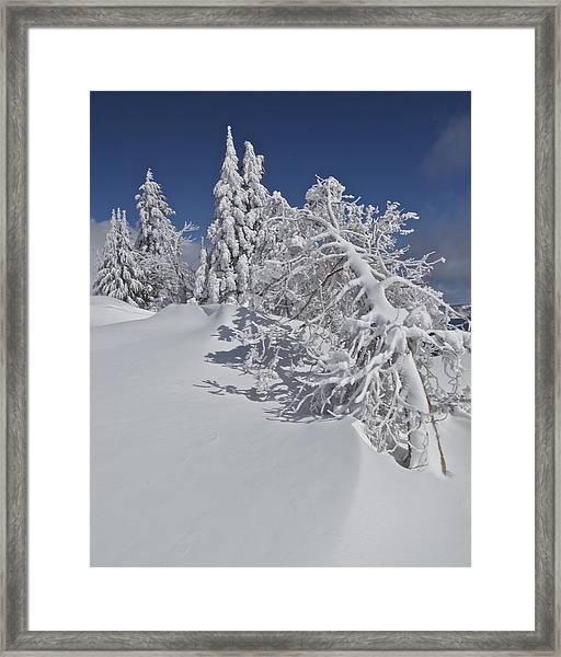 Crater Lake Trees 2 Framed Print