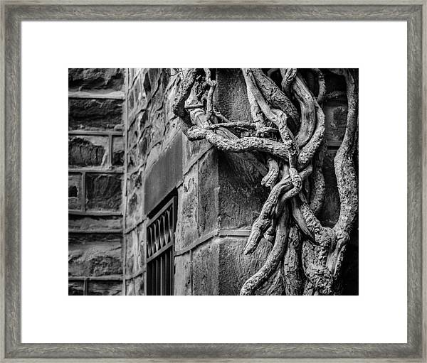 Framed Print featuring the photograph Creeper by Steve Stanger