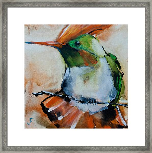 Crested Croquette Hummingbird Framed Print