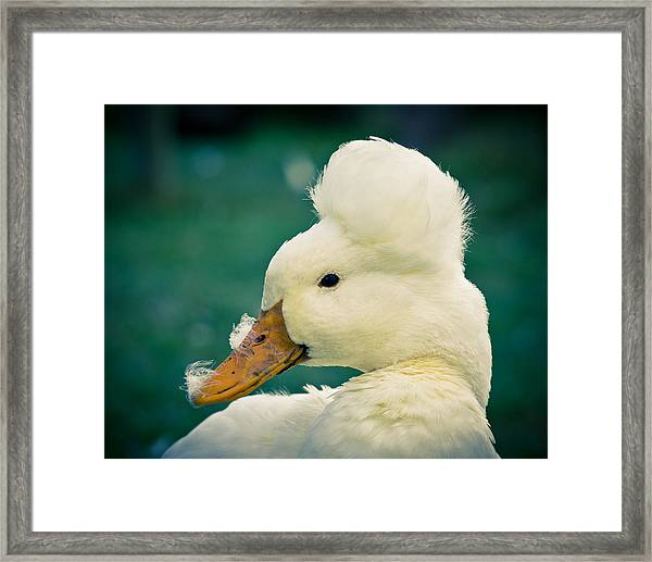 Framed Print featuring the photograph Crested Duck by Priya Ghose