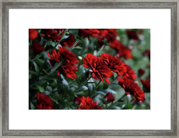 Crimson And Clover Framed Print