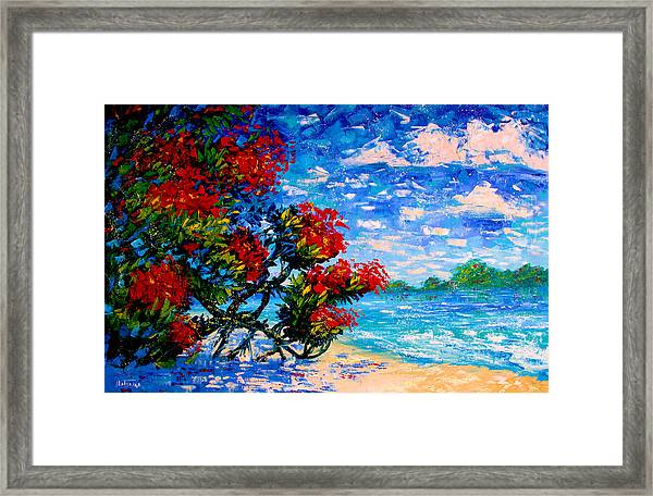 Crimson Bloom Red Flower Tree At The Beach Blue Sky Landscape Framed Print