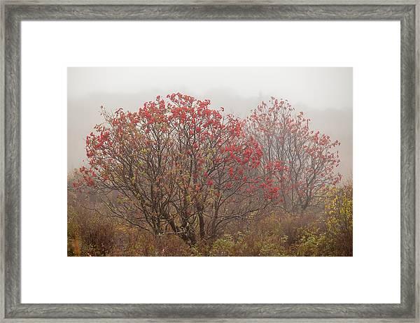 Crimson Fog Framed Print
