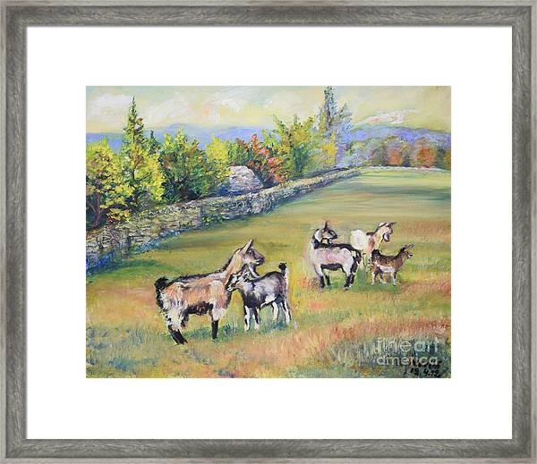 Croatian Goats Framed Print