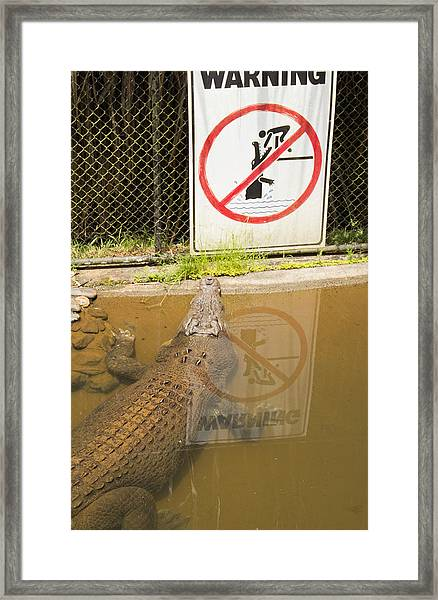 Croc Rules Framed Print by Debbie Cundy