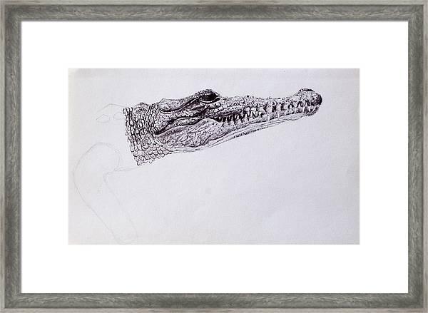 Croc Sketch Framed Print