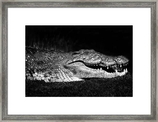 Framed Print featuring the photograph Crocodile  by Gigi Ebert