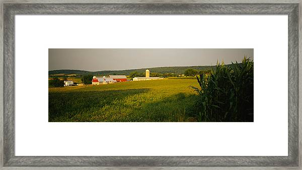 Crop In A Field, Frederick County Framed Print