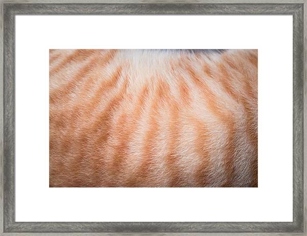 Cropped Image Of Cat Hair Framed Print by Ekachai Chobphot / EyeEm