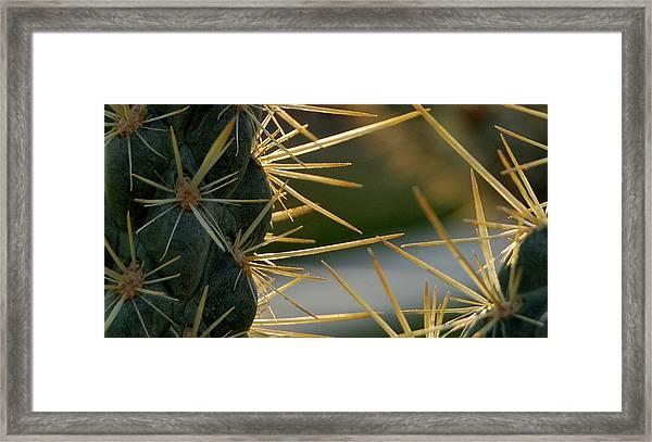 Cross Swords  Framed Print