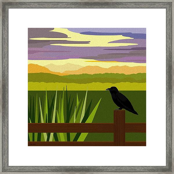 Crow In The Corn Field Framed Print