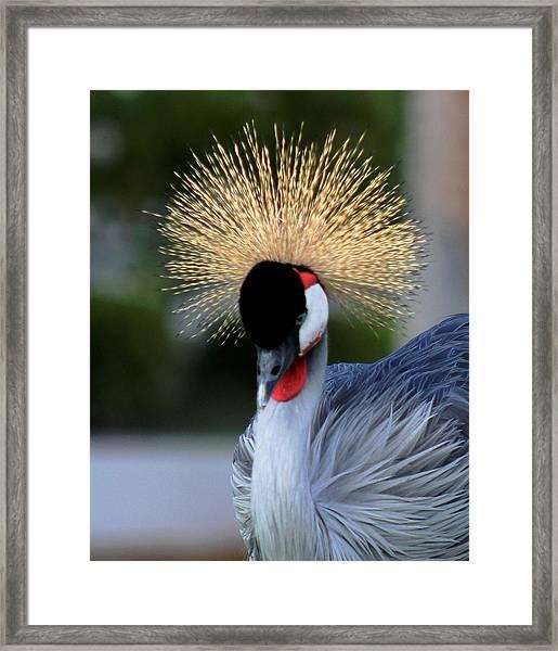 Crowned Framed Print